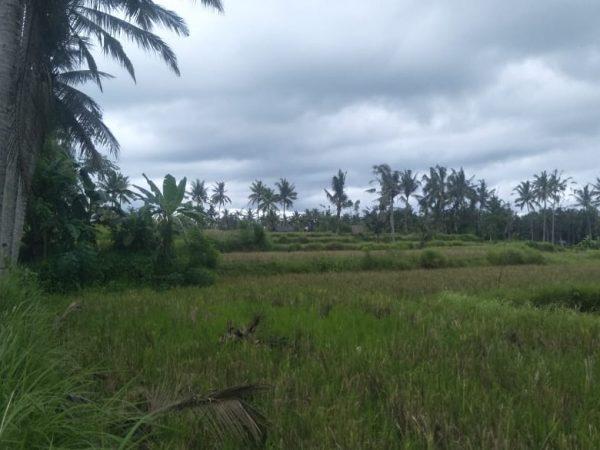 Dijual tanah-15H. Lokasi tangkulak  kemenuh sukawati gianyar. Bali